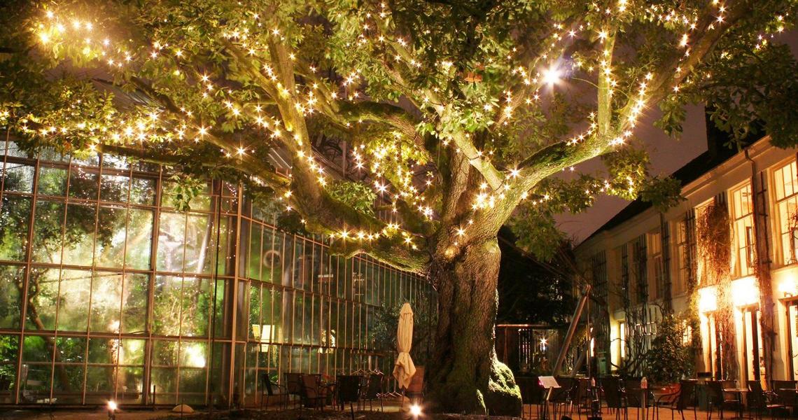 Hortus by light nu te bezoeken!