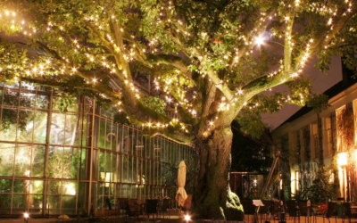 Hortus by light nu te bezoeken!