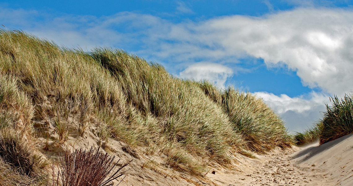 Duinen-HARRY! - HARRY! by WestCord
