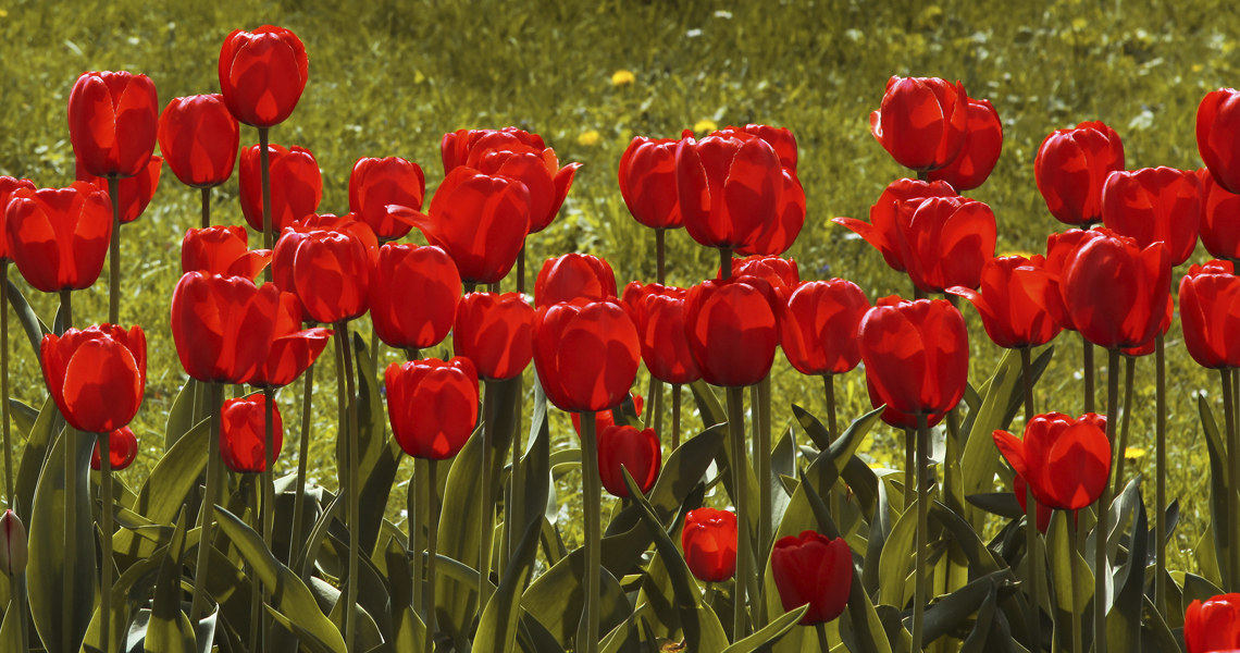 Als de lente komt, dan stuur ik jou…