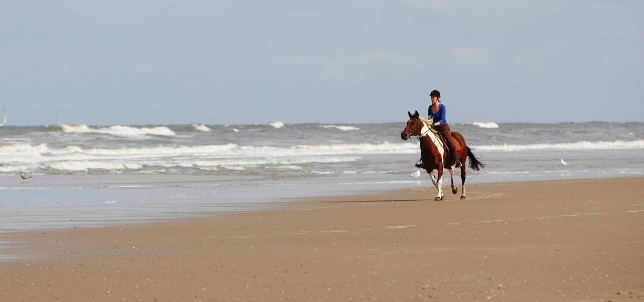 paardrijden-op-vlieland-westcord-strandhotel-seeduyn-manege-de-seeruyter-1 - HARRY! by WestCord