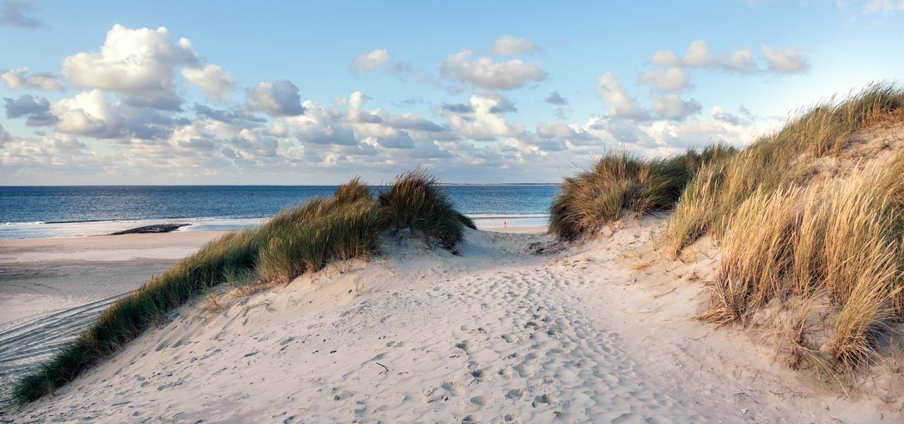 Strand van Vlieland - HARRY! by WestCord